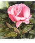 Painting Raindrops on Roses eLesson